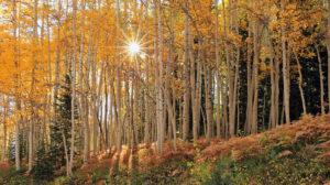 22 de septiembre, inicia oficialmente el otoño