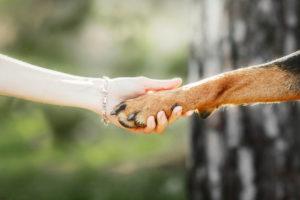 Responsabilidad social con los animales